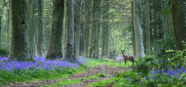 Angmering Park Estate woodlands