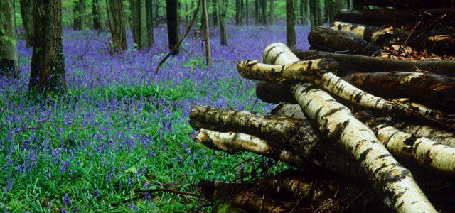 Angmering Park Estate woodlands logs
