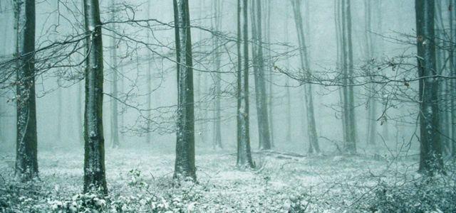 Angmering Park Estate woodlands snow