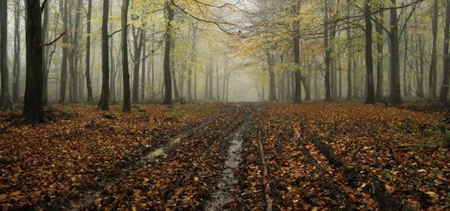 Angmering Park Estate woodlands tracks