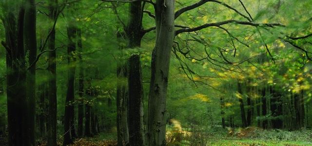 Angmering Park Estate woodlands trees