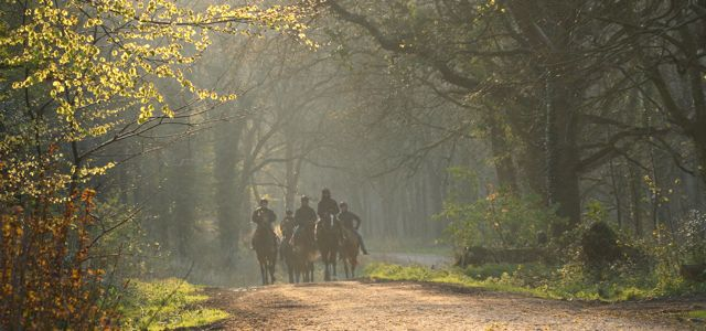 Angmering Park Estate racing horses in forest